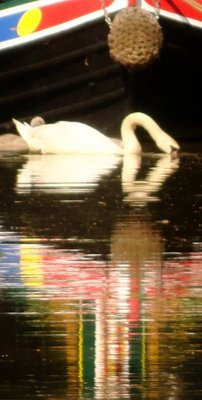 Swan and Prow