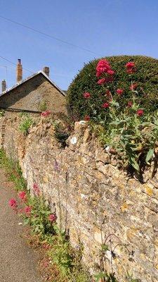 Typical Garden Wall