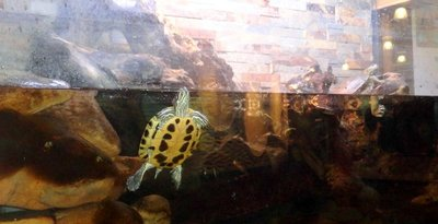 Virginia Creek Aquarium