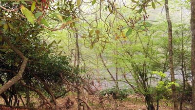 WV Foliage