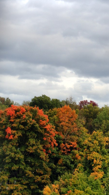 Fall Colors and Cloudy Skie
