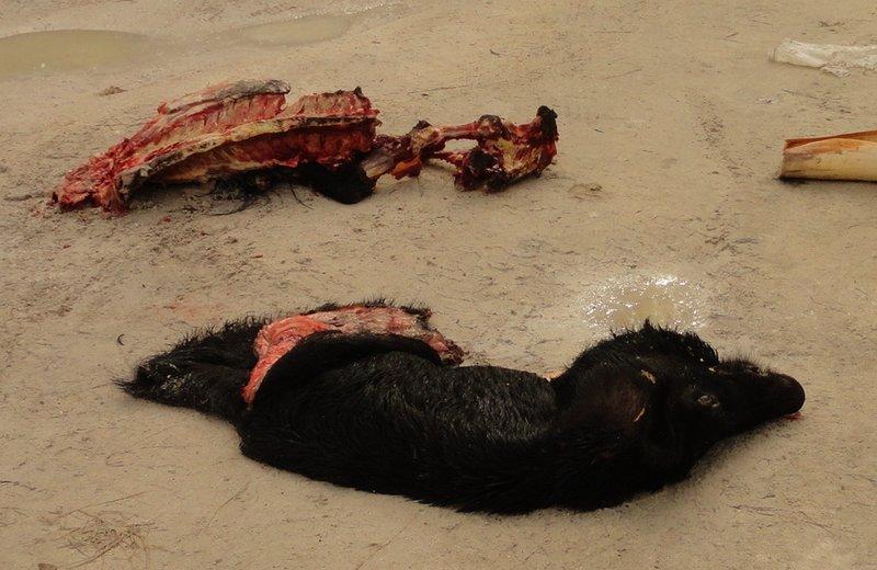 Carcass View 2