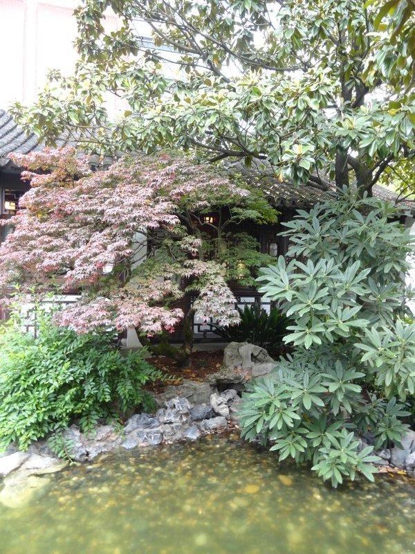 Chinese Garden 2