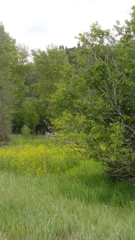 Green Grass of Montana