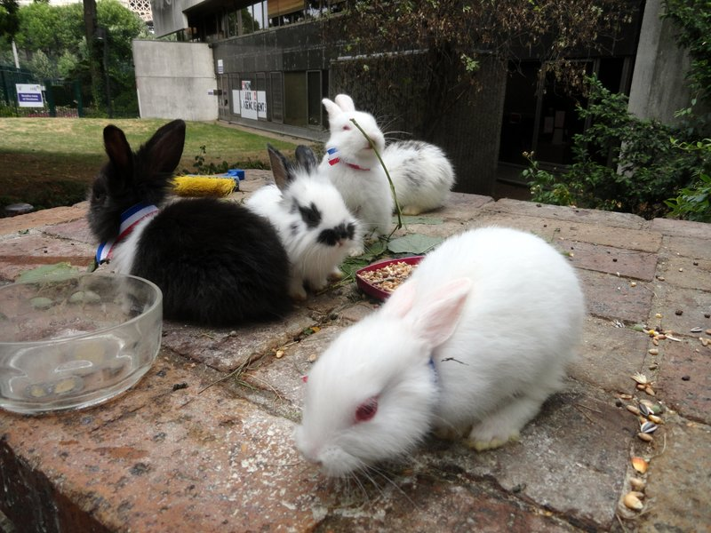 French Bunnies to Photo