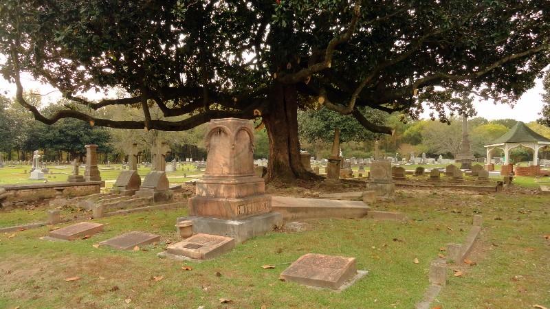 Magnolia Over the Stones