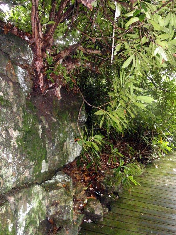 Rock Wall and Boardwalk