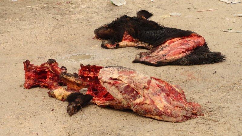Carcass View 1