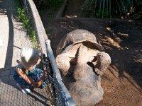Golapagos Turtle