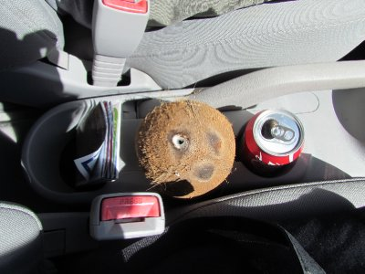 See anything out of the ordinary? A coke and a coconut