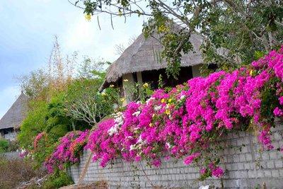 Jabeki Flowers, Bali, Indonesia