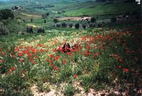 Poppies in Valdorcia, Tuscany