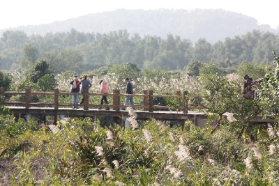 Qi'Ao Mangrove trail