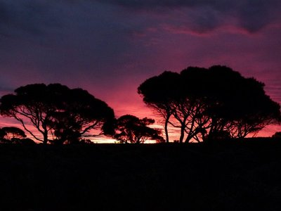 Nullarbor sunset