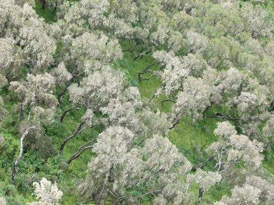 Erica heath forest
