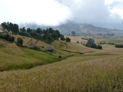 Grain fields in the lowlands