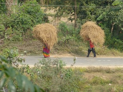 Walking Haystacks