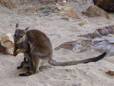 2012_Australia-429.jpg