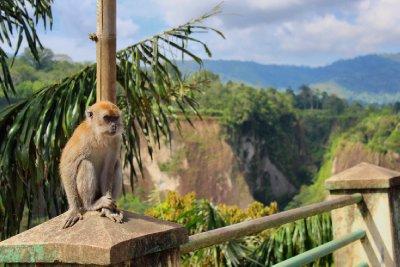 The Monkey Sianok