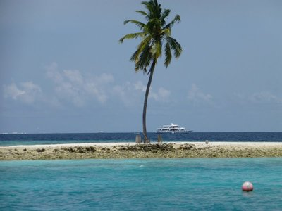 A lone coconut tree on a tiny island in the Indian Ocean