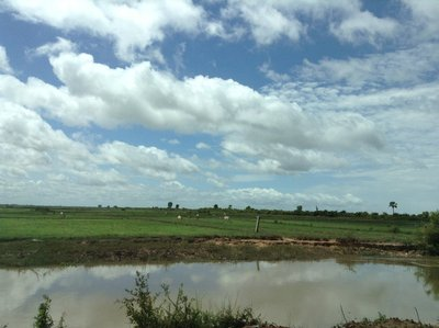 Flat open rice fields, prone to floods, along the canal to Lake Tonle Sap