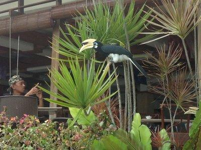 Hornbill for photographers.
