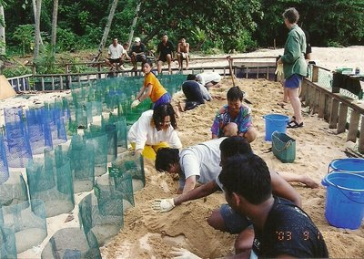 Volunteers are busy digging the unhatched eggs