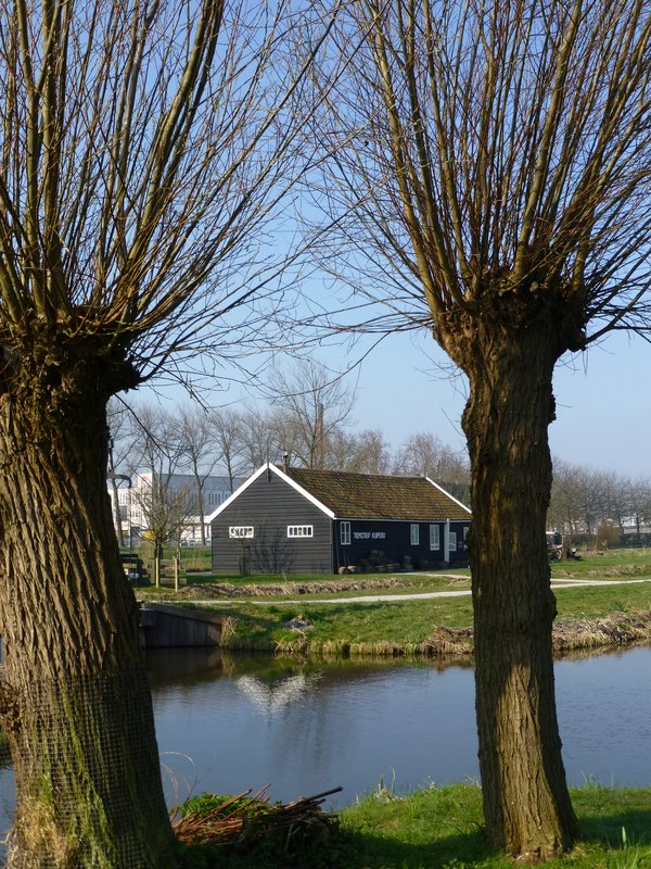 Trees are still bare of leaves at Zaanse Schans village. 220413