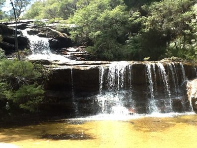 Afdaling naar waterval in Blue mountains