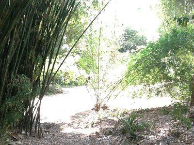 Wandeling door de botanical garden van Cairns