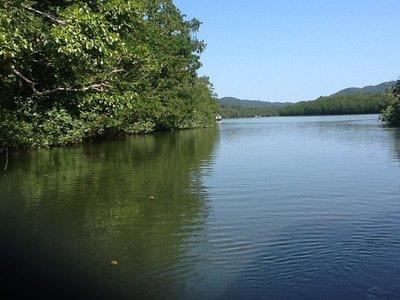 Daintree River in het regenwoud