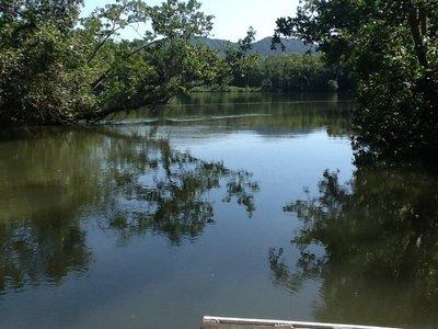 Hoog tij op de Daintree River