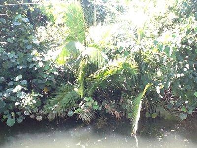 Op zoek naar krokodillen op de Daintree River