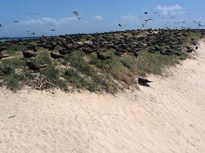 Duizenden zwarte meeuwen heen en weer vliegend,je net niet rakend