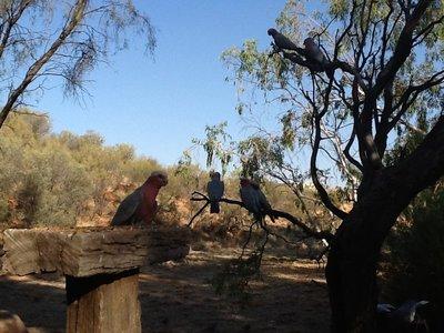 En ook aan deze papegaaien
