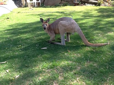 Op onze wandeling naar het centrum van Alice Springs,gewoon in de tuin
