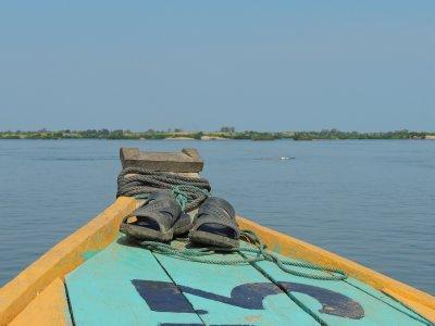 014_Boat_t.._-_dolphin_.jpg