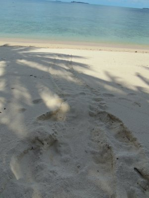 Turtle tracks from the night before on the beach on Turtle Island in Borneo