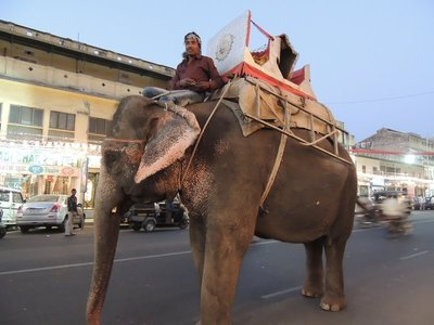 Elephant in the street in Jaipur