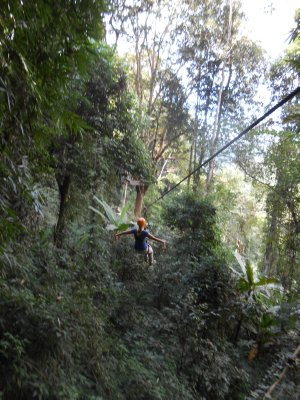 Tam swinging through the canopy