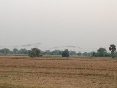 Bats hunting over the fields near Battambang