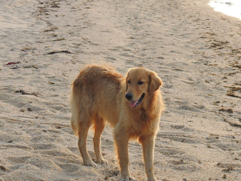 Leon the Dog a.k.a. Suze!!