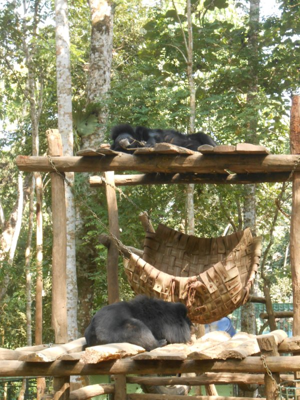 Bears at the bear rescue centre