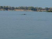 012_Boat_t.._-_dolphin_.jpg