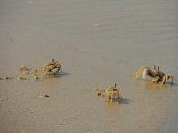 020_The_cr..onely_Beach.jpg