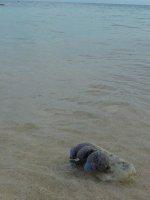 027_Turtle.._adventures.jpg