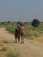 028_Camel_..Thar_Desert.jpg