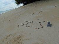 029_Turtle.._adventures.jpg