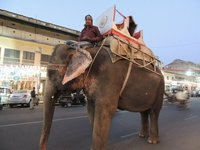 030_Elepha..s_of_Jaipur.jpg