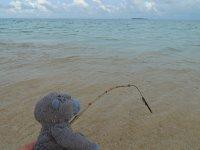 033_Turtle.._adventures.jpg